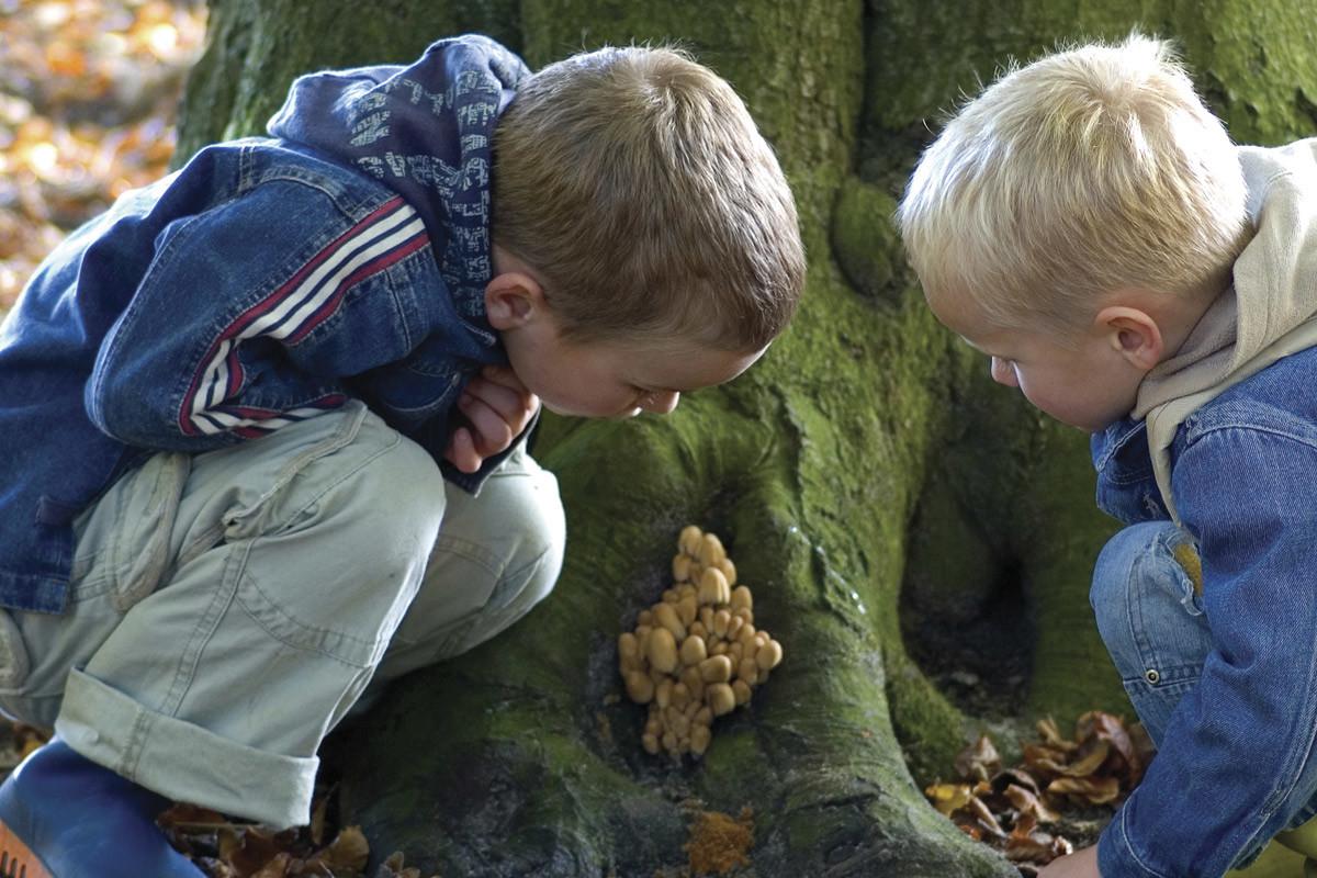 Børn i skov, matematisk opmærksomhed